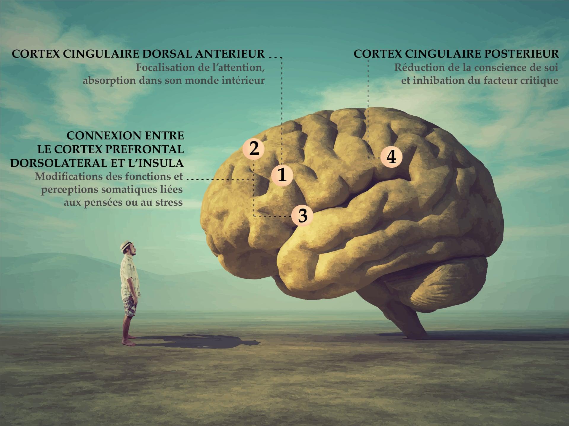 Hypnotiseur Paris - Effets de l'hypnose sur le cerveau